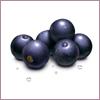 Harvesting-acai-berry02.21